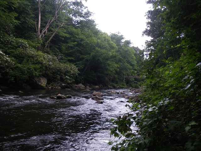 Looking Upstream on the Savage River
