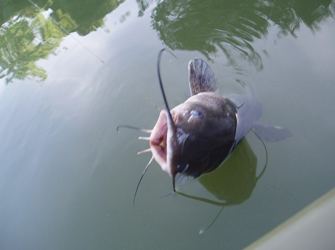 From the pish page warm water fishing for Lafayette reservoir fishing report